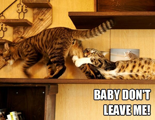 http://i1.wp.com/www.lawlz.org/wp-content/uploads/2013/08/baby-dont-leave-me-cats-funny-meme.jpg?resize=600%2C468