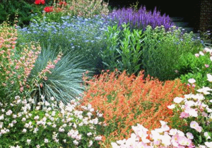 Xeriscaping Service