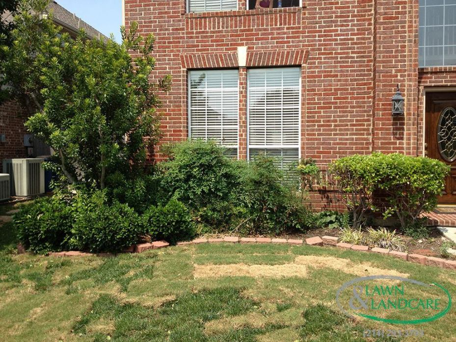 before - garden to be redesigned