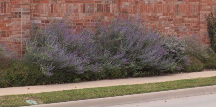 Seasonal Color Lavender Project