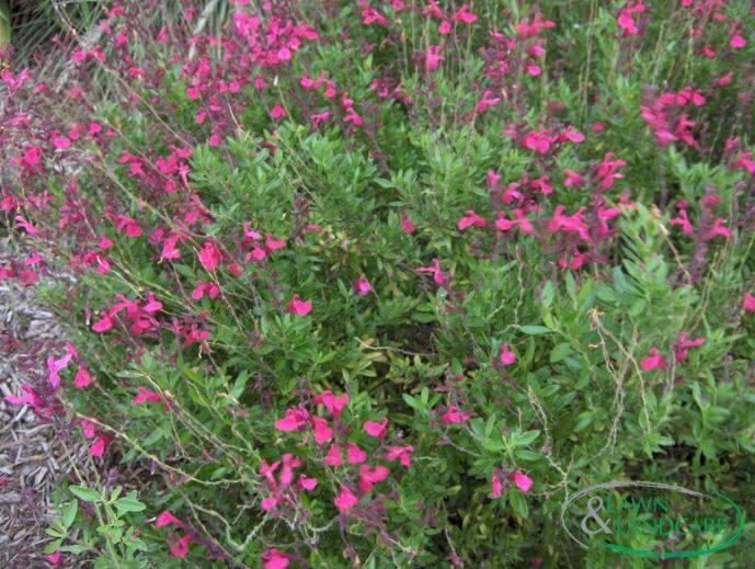 landscaping design seasonal color design