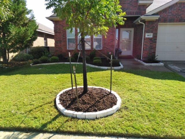 raised-bed tree plots in texas