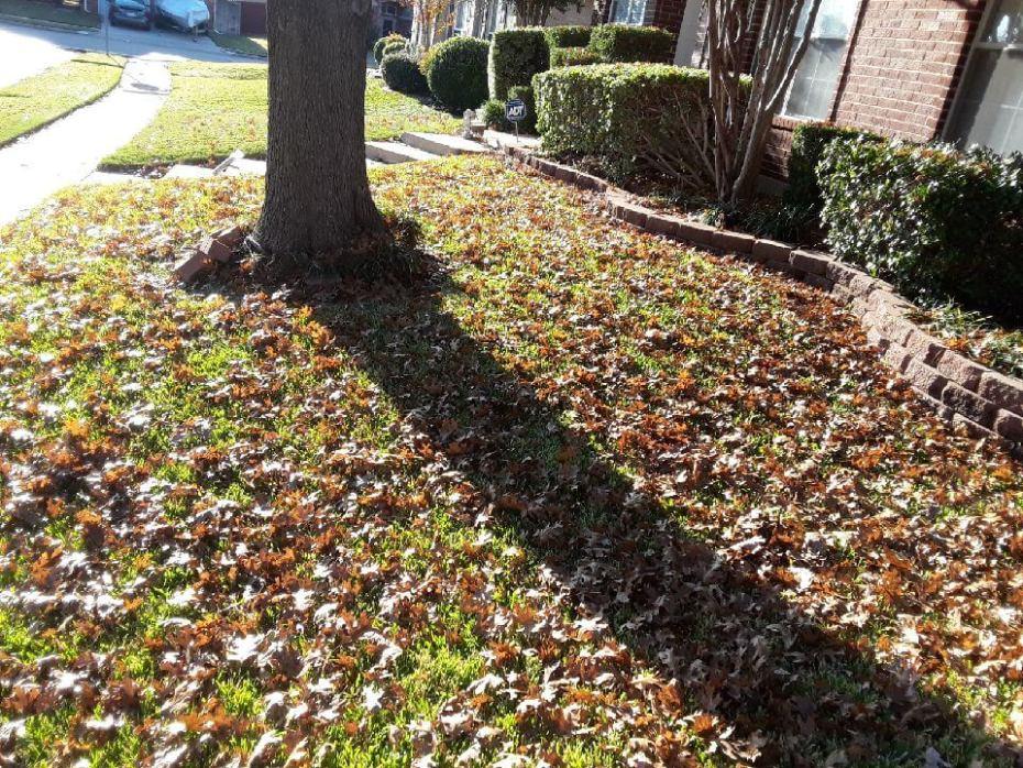 leaf cleanup texas