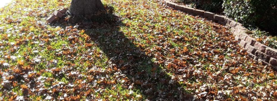 leaf cleanup texas
