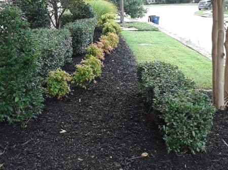 mulch and shrubbery lawncare example