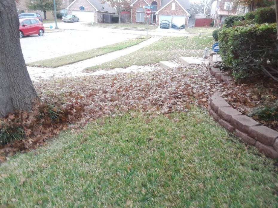 landscape cleanup examples before