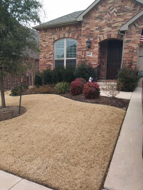 dry lawn garden designs