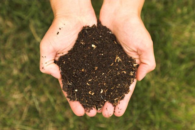 Compost in Hands