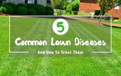 5-Common-Lawn-Diseases-And-How-To-Treat-Them