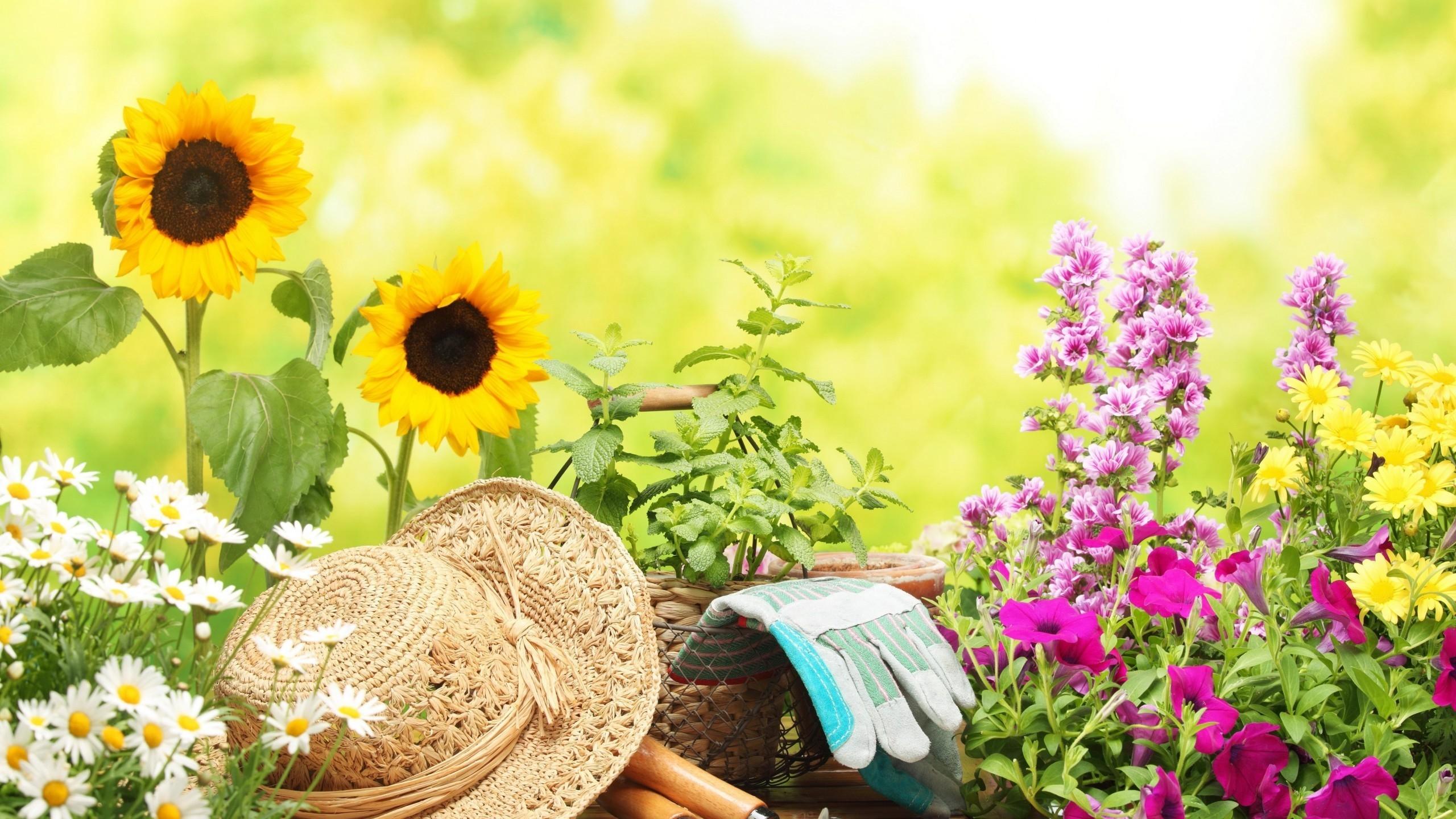 The Top 50 Gardening Blogs of 2016 - Lawnstarter on Gardening  id=93831