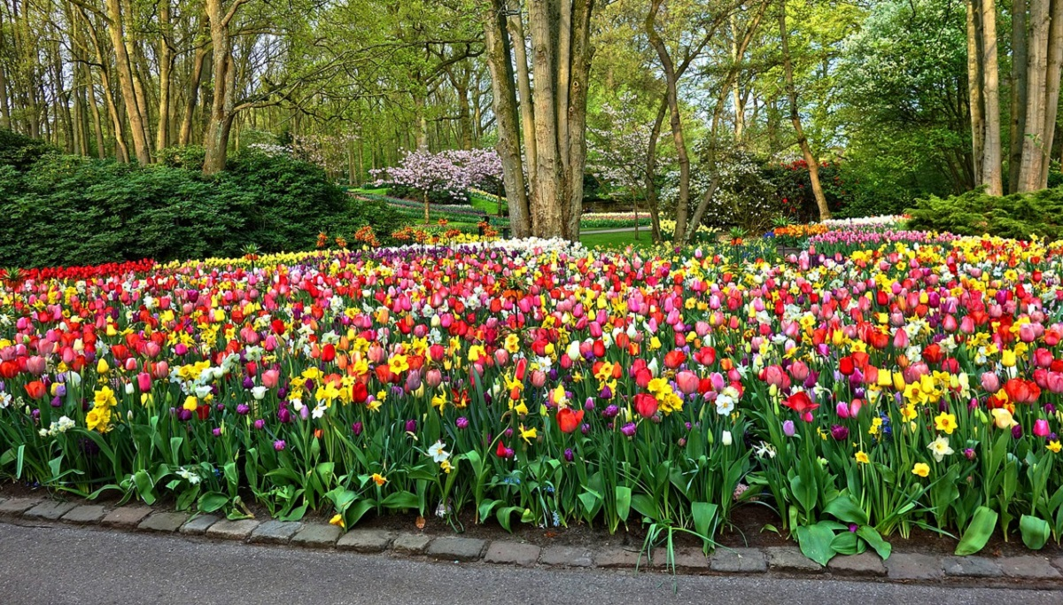 Garden Edging 101 Ideas And Tips For Diy Installation Lawnstarter