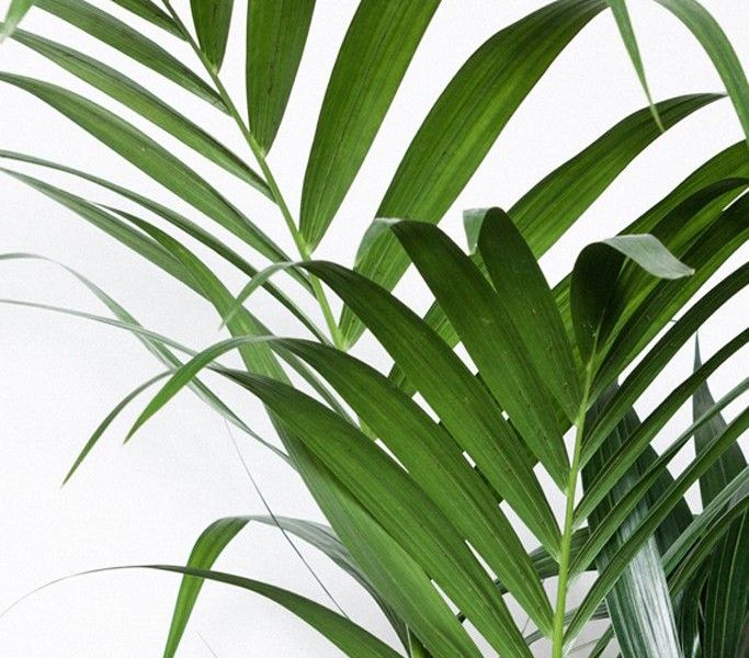 Foliage, palm trees and all things lush and green