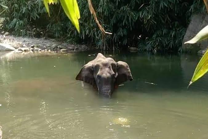 [Elephant Deaths] Madras High Court cited Hubert Reeves while directing CBI probe to the man unaware that the nature he destroys is the God he worships.