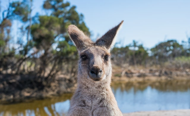 10 Best Immigration Lawyers in Hobart