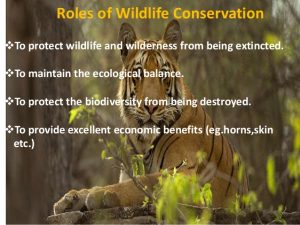 Strict nature reserves, national parks, nature reserves, forest corridors, and sanctuaries recognized under the flora and fauna protection ordinance are managed by department of wildlife conservation. Wildlife Conservation Laws In Bangladesh The Lawyers Jurists