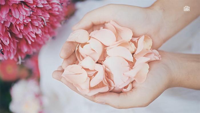 กลีบดอกกุหลาบ