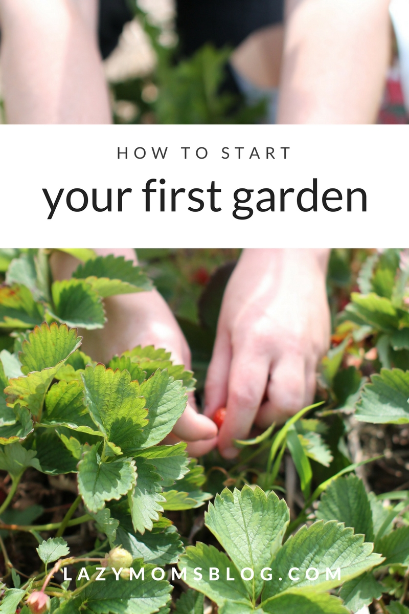 How to start your first garden, build a raised bed, plant and make garden markers.