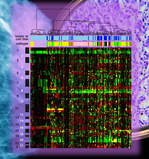 Cancer Genome Research