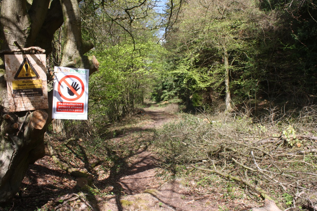 Forestry operations reveal trackbed