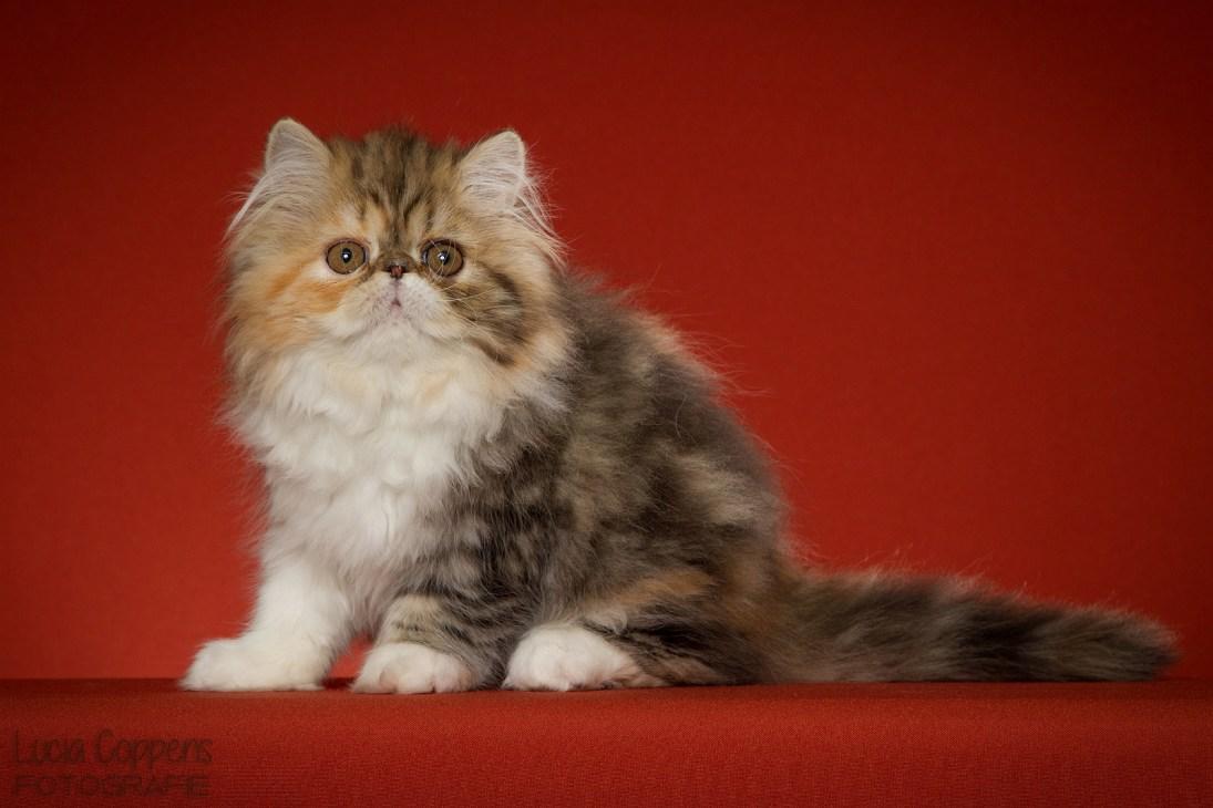 Kattenfotograaf_Brabant