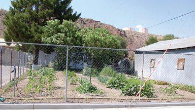 UNCE Community Garden in Caliente a Work in Progress