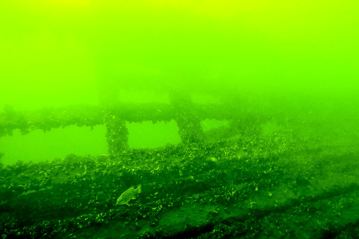 Underwater image taken by ROV of a shipwreck covered in crustaceans and a fish swimming by