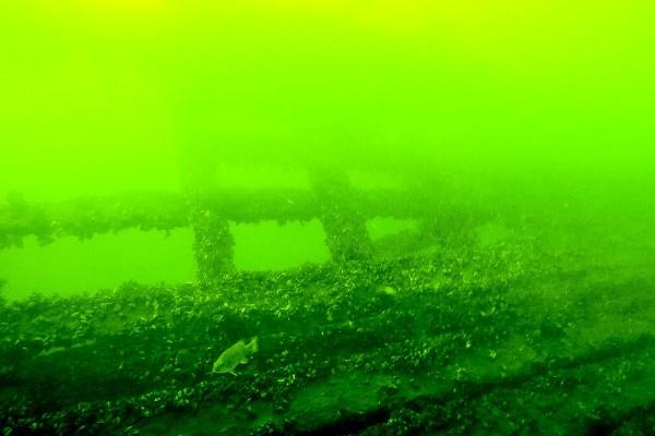 ROV Shipwreck Tours