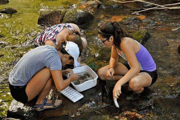Image of students sorting invertebrates.