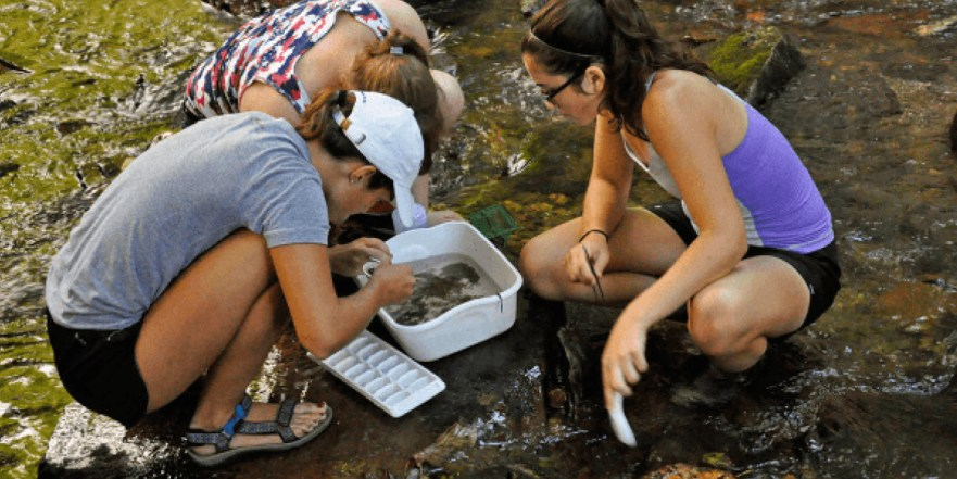 Three students sort inverts in the river