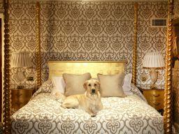 Top 10 Dog Friendly London Hotels