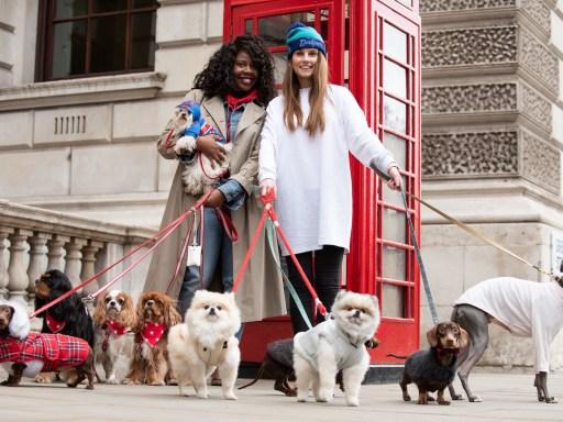 London Dog Week: Making London more dog friendly
