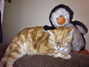 Get off me you crazy penguin