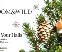 Bloom & Wild - Tiny Christmas Trees, perfect for small spaces 172