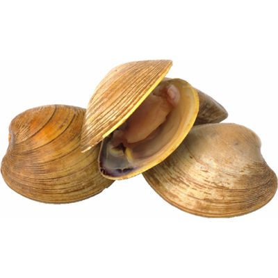 Image Result For Are Clams Shellfish Allergy