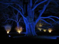 Blue Spotlight Tree