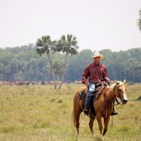 Deseret Ranches in Florida