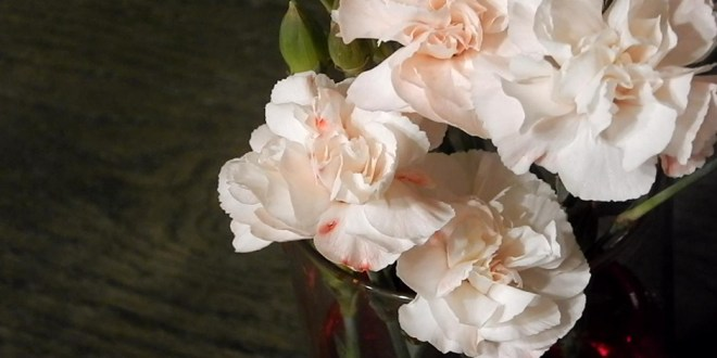 LDS OBJECT LESSON: Easter Carnations