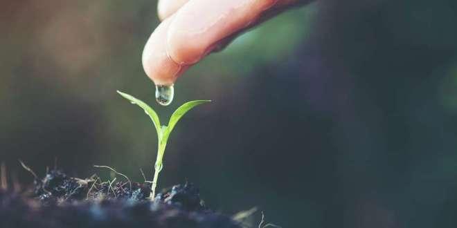 FHE Lesson on Faith - Faith Is Like a Little Seed