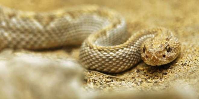 You Can't Pet a Rattlesnake | 27 April 2019