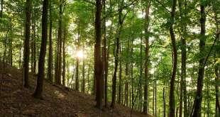 Church Announces New Hill Cumorah Preservation Project
