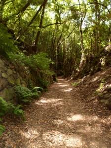 La forêt de Los Tillos (3)