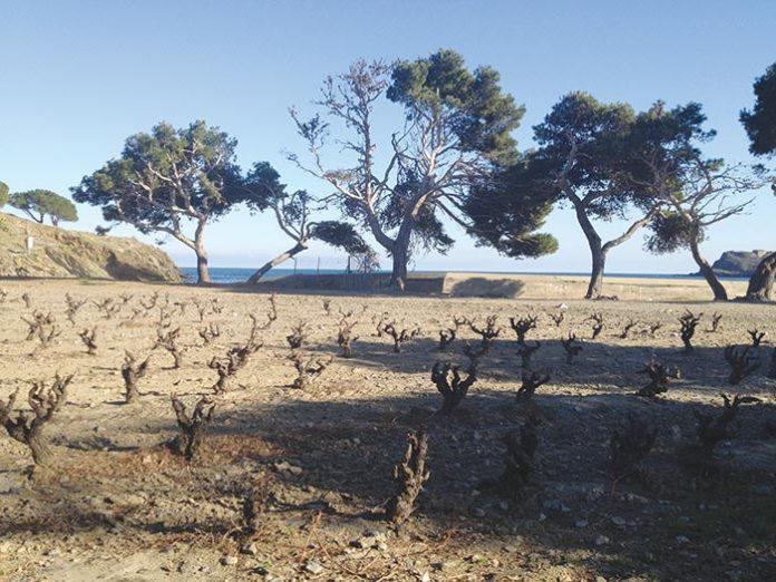 La Chambre d'Agriculture des P-O crée un point accueil «Agriculteurs fragilisés» pour les viticulteurs