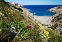 cerbere-banyuls-premiere-reserve-marine-creee-en-france