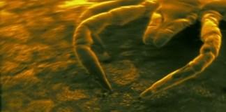 une-des-plus-grosse-epidemie-au-monde-fait-rage-dans-les-pyrenees