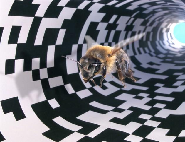 le-soler-conference-les-rendez-vous-de-la-connaissance-les-abeilles-face-aux-faibles-doses-de-pesticides