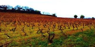 de-la-vigne-a-la-cave-visites-guidees-de-loffice-de-tourisme-de-perpignan