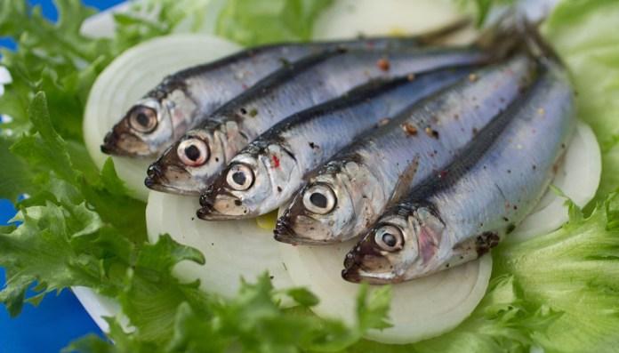 Collioure-fete-anchois