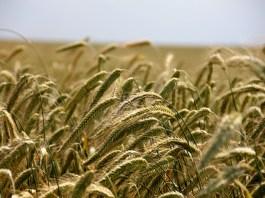 faire-vivre-lagriculture-paysanne-sur-notre-territoire-la-fondation-raoul-follereau-repond-present
