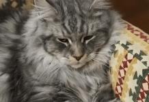 bientot-un-bar-a-chats-dans-perpignan