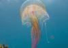 lobservatoire-oceanologique-de-banyuls-sur-mer-presente-lexposition-annuelle-inedite-toiles-de-mer-a-partir-du-1er-avril